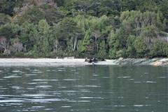 Die Seelöwen sonnen sich